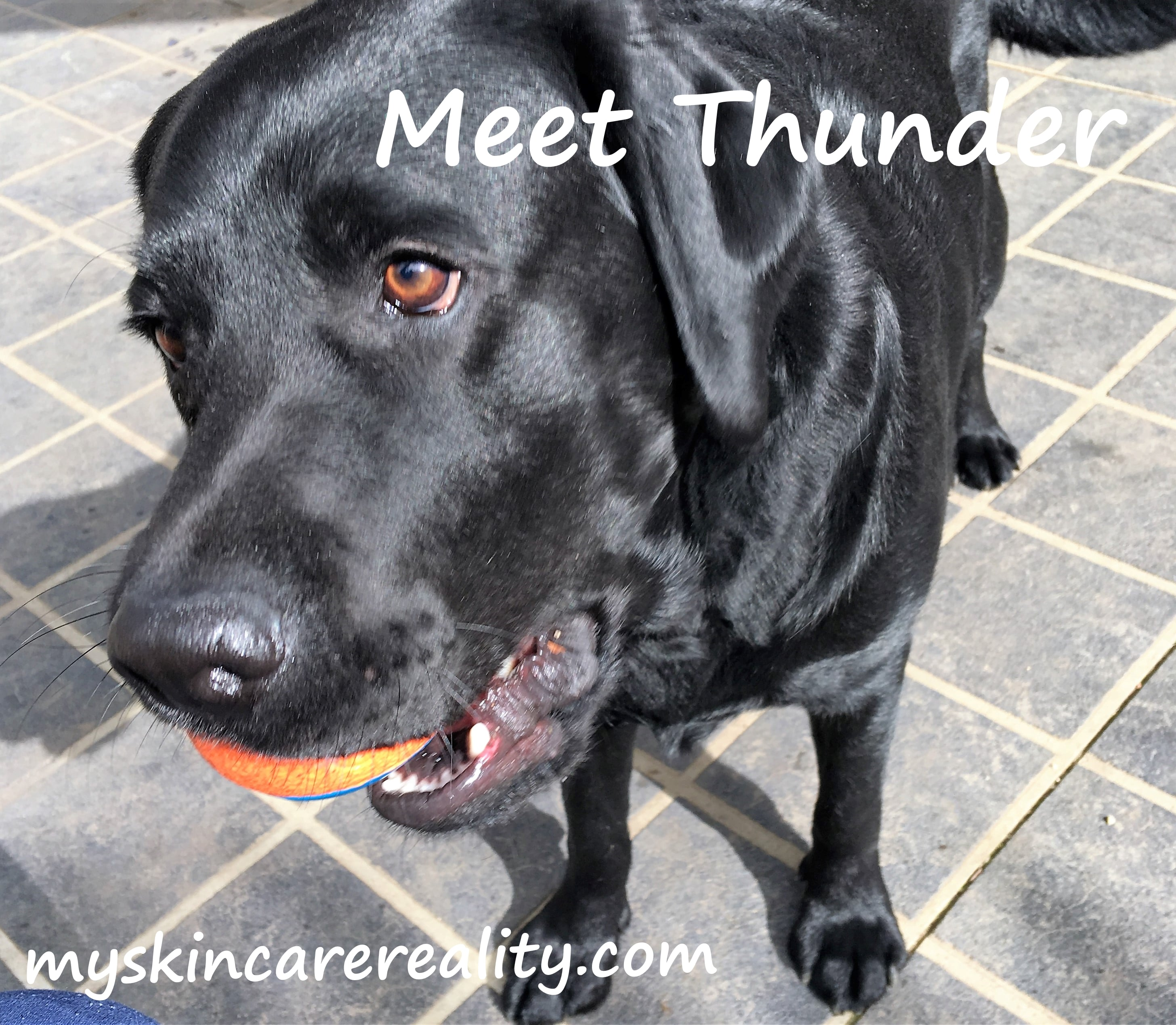 Meet my Quality Control Lab Assistant – Thunder