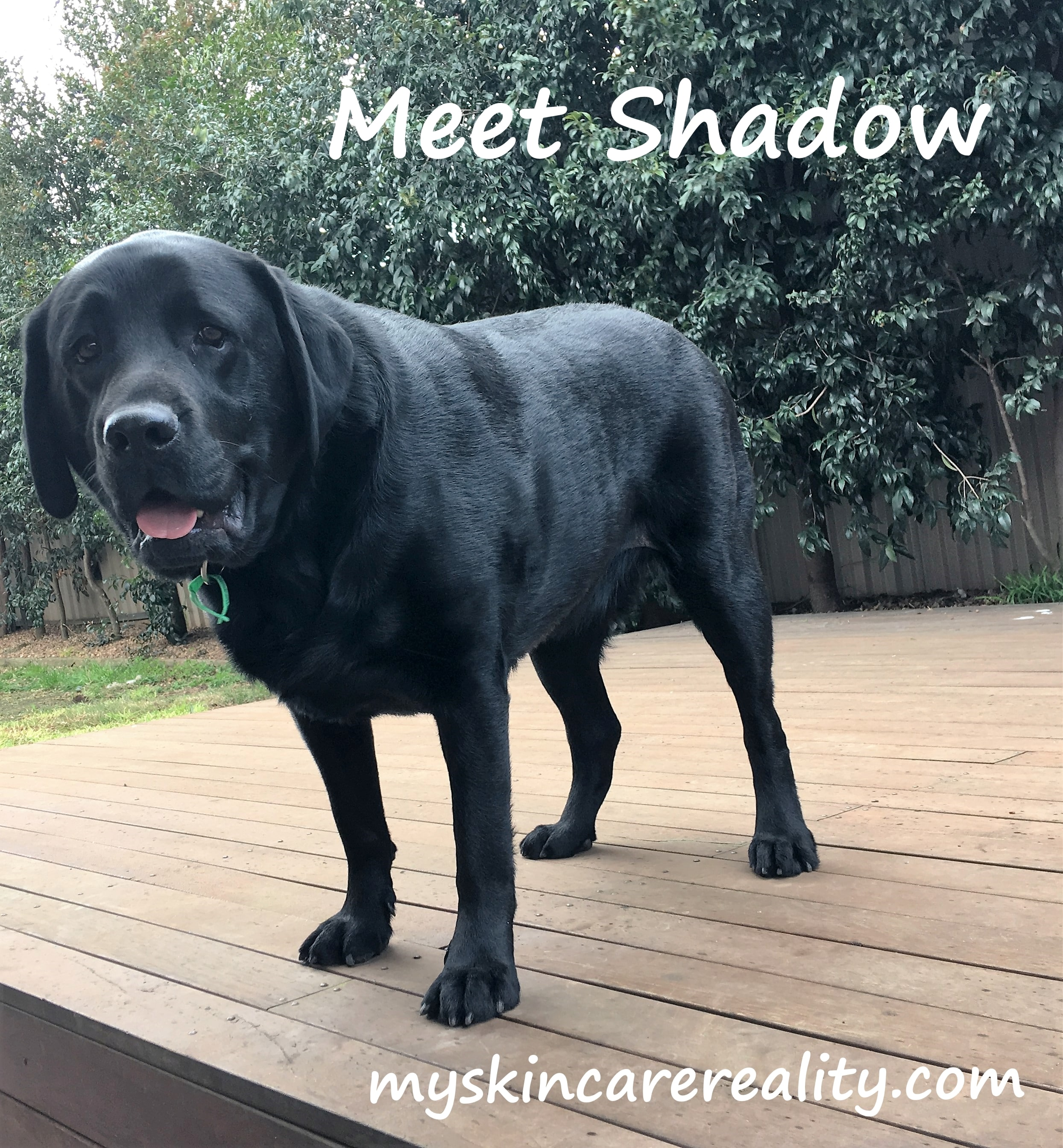 Meet my Security Lab Assistant – Shadow
